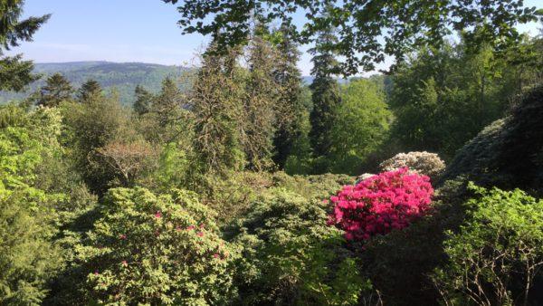 Grüne plädieren für nachhaltiges Tourismuskonzept für Heidelberg